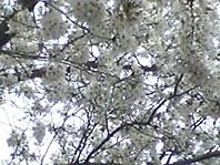 06-04-06_15-36.jpg