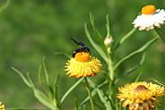 なんと言う名前の蜂?, IMG_0208.JPG