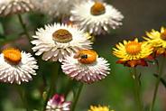 これは蜜蜂?, IMG_0225.JPG